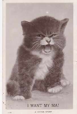 b animals cat kittens pets old picture postcard collecting