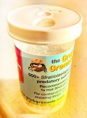 Stratiolaelaps scimitus - The Grub Grenade 500+ mites for fungus gnats and more!