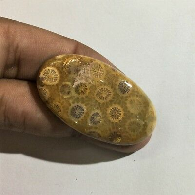 53 Cts 100% Natural Fossil Coral Cabochon Top Quality Loose Gemstone L#888-2
