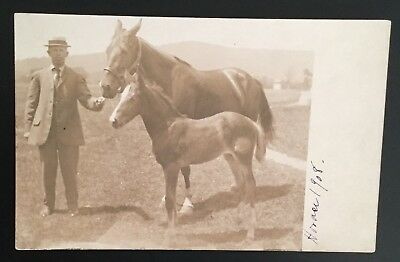 Antique Postcard - 1908 RPPC of Man and Two Horses