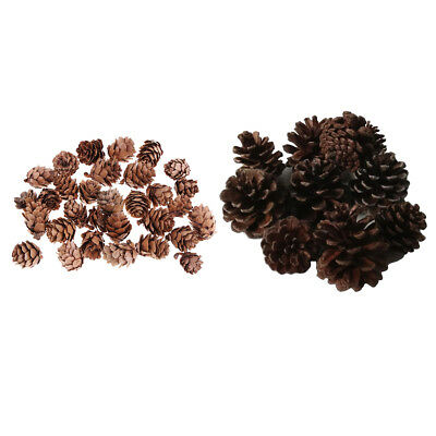 40pcs Real Natural Small Pine Cones in Bulk for Accents Decors Ornament