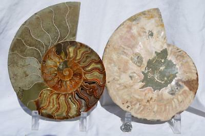 "Cut Split PAIR Ammonite Deep Crystal Cavity 110myo Fossil 205mm XXXL 8.0"" 1499xv"