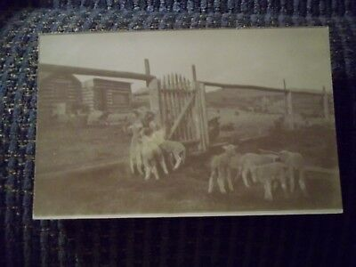 RPPC Ranch With Sheep And Lambs Dated 1907 Montana