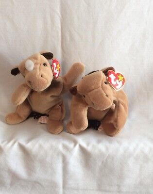 TY Beanie Baby - Derby The Horse Beanie Baby - Set If Two
