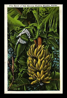 Dr Jim Stamps Us Fine Bunch Ripe Bananas Showing Blossoms Florida Postcard