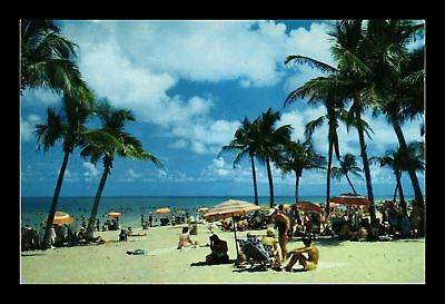 Dr Jim Stamps Us Lovely Florida Beach Coconut Palms Chrome View Postcard