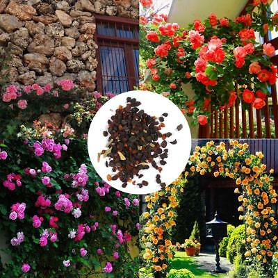 100Pcs Perfume Climbing Plants Colorful Rock Cress Flower Seeds N4U8 01