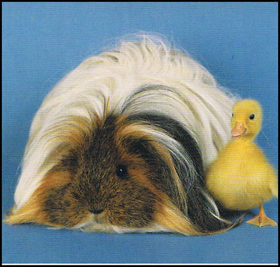 GUINEA with a DUCKLING featured on a FRIDGE MAGNET