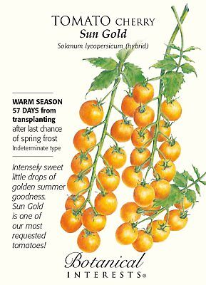 Sun Gold Cherry Tomato - 10 Seeds - Very Sweet