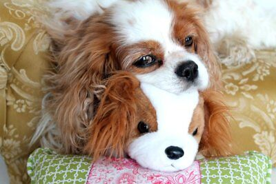 Friday & Her Buddy Blenheim Cavalier King Charles Spaniel post card