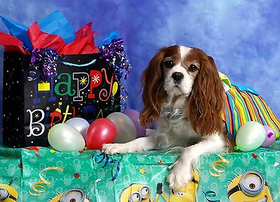 Blenheim Happy Birthday Cavalier King Charles Spaniel blank note card