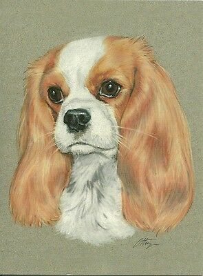 Anna a Blenheim Cavalier King Charles Spaniel One blank note card