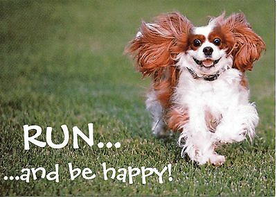 RUN, and be happy  One Blenheim Cavalier King Charles Spaniels small blank card