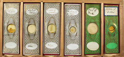 Six Antique Paper Wrapped Microscope Slides No.2
