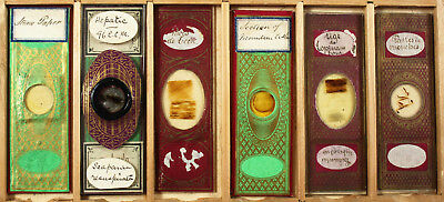Six Antique Paper Wrapped Microscope Slides No.7
