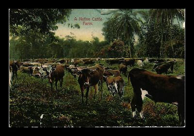 Dr Jim Stamps Us Canal Zone Panama Native Cattle Farm Topical Postcard