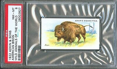 1922 Adkin & Sons AMERICAN BISON Wild Animals of the World Trade Card PSA 8