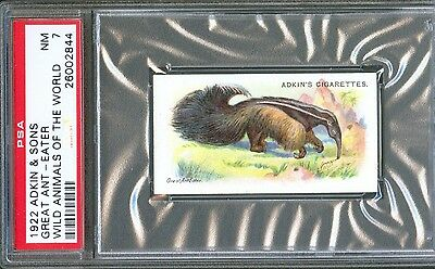 1922 Adkin & Sons GREAT ANT-EATER Wild Animals of the World Trade Card PSA 7