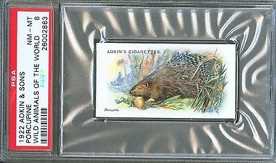 1922 Adkin & Sons PORCUPINE Wild Animals of the World Trade Card PSA 8