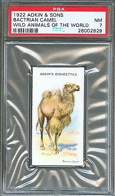 1922 Adkin & Sons BACTRIAN CAMEL Wild Animals of the World Trade Card PSA 7