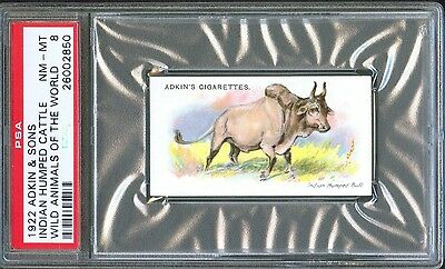 1922 Adkin & Sons INDIAN CATTLE Wild Animals of the World Trade Card PSA 8