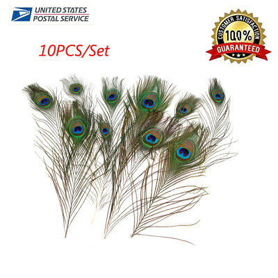 Medium Eyes Feather Peacock Eye Natural 25-35cm Pack of 10 - Craft Milline