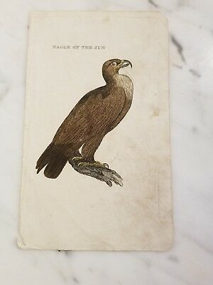Antique Book Plate Lithograph of Eagle Of The Sun