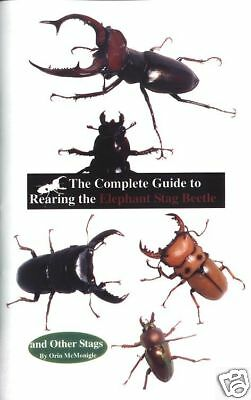 Complete Guide to Rearing the Elephant Stag Beetle Care