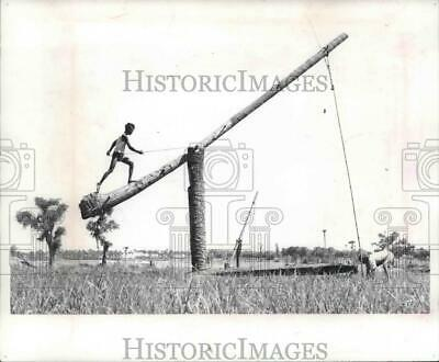 1965 Press Photo Rice farmers use primative methods to pump water from a well
