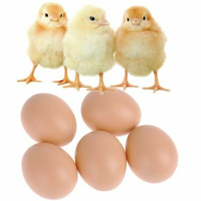 Dummy Fake Plastic brood Eggs Chicken Duck Poultry artificial egg White 5 WS