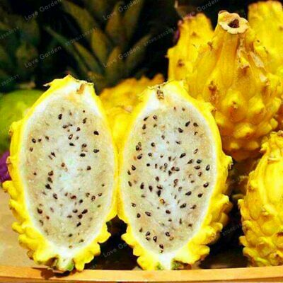 Yellow Dragon Fruit 100pcs Bonsai Seeds Exotic Fruits Mix Rare Tree Plant Garden