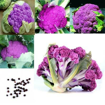 Purple Broccoli Seeds Rare Brassica Oleracea Botrytis Vegetables Seeds EN24H