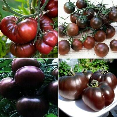 60pcs Tomato Seeds Red Black Cherry Tomato Seeds Organic Fruit Vegetable Grown