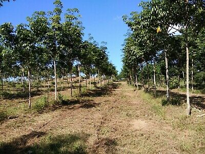 Land for sale in Thailand