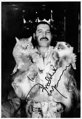 """Freddy Mercury Queen with Beloved Cats Signed Photo  FRIDGE Magnet 2.5"""" x 3.5"""""""