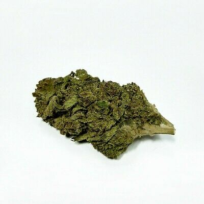 ERBA SATIVA LIGHT - CHEESE (Indoor)