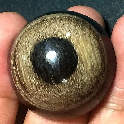 104ct Brown Black White 'GREEK EVIL EYE' Picture AGATE ~100% Natural Wood Fossil
