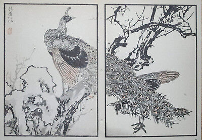 THE PEACOCK : Print Of a JAPANESE WOODBLOCK Bird Print By BAIREI
