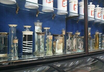 Vast Collection of Zoological Wet Specimens Musuem Antique Taxidermy Curio