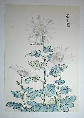 'KIKU' CHRYSANTHEMUM FLOWER, MUM ii : AN AUTHENTIC JAPANESE WOODBLOCK PRINT