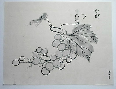 GRAPES, GRAPE VINE 'Budo' : ORIGINAL MEIJI JAPANESE WOODBLOCK PRINT By GYOKUSHO