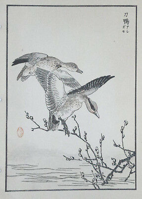 EURASIAN TEAL, Duck : Print Of a 1880s JAPANESE WOODBLOCK Bird Print By BAIREI