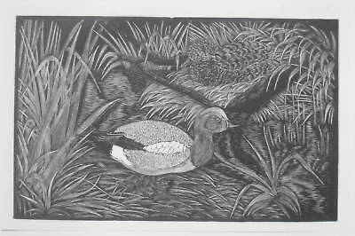 WIDGEON DUCK old 1928 BIRDS Bird PRINT Woodcut Wood Etching Game Bird