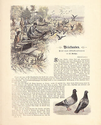 Carrier-Homing Pigeons Austrian chromolithograph late 19th Century approx.1896