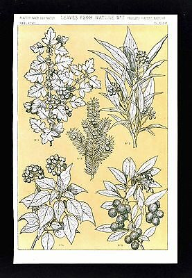 1868 Owen Jones Ornament Print Leaves from Nature No 7 Hawthorn Yew Ivy Other