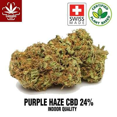 ERBA LIGHT PURPLE HAZE 24% -1g -2g - 5g -10g -50g -100g INDOOR SVIZZERA CANAPA