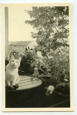 Curious German Kitty Cat on Patio Table Beautiful Spring Flowers Vtg 1954 Photo