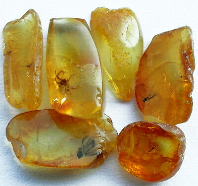 5 PEICES OF BALTIC AMBER WITH INSECT INCLUSIONS circa 44 million BC