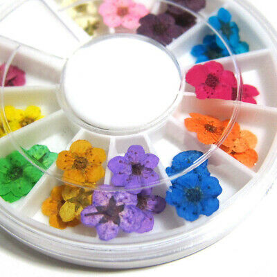 Manicure 12 Color 3D Real Dried Flowers UV Gel Acrylic Nail Art Tips Decor HOT