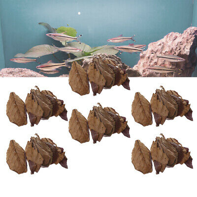 60x Premium Grade Catappa Indian Almond Leaves Perfect for Breeding & Hiding